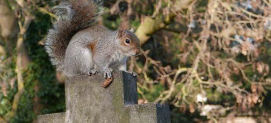 Katja Schmitt London Squirrel Brampton