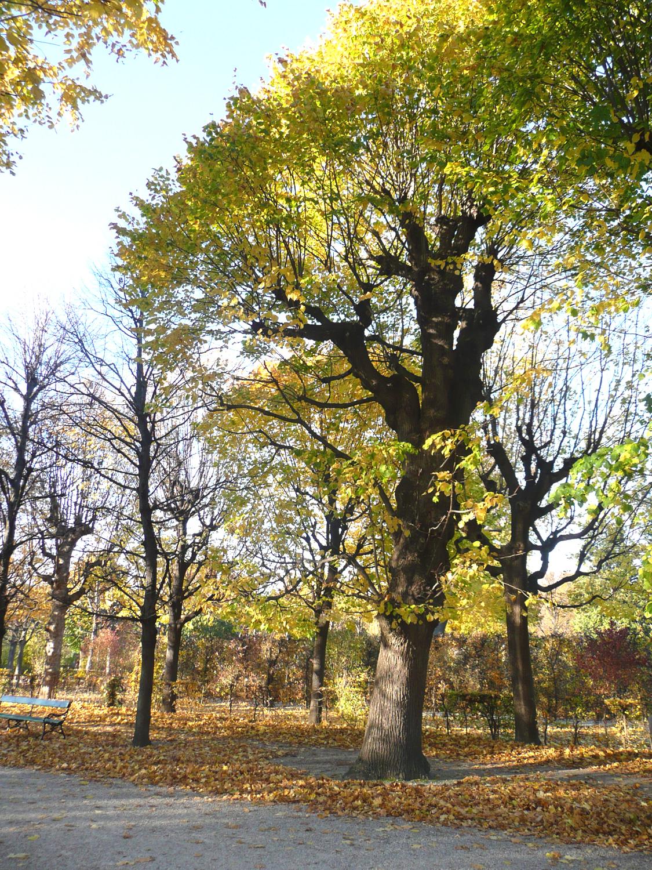 Katja Schmitt Vienna Wien Autumn Herbst Sight Schoenbrunn Park