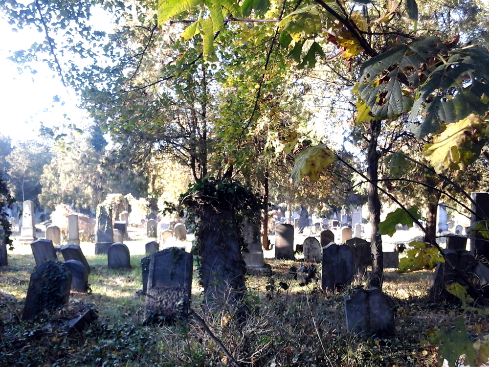 Katja Schmitt Vienna Wien Autumn Herbst Sight Zentralfriedhof