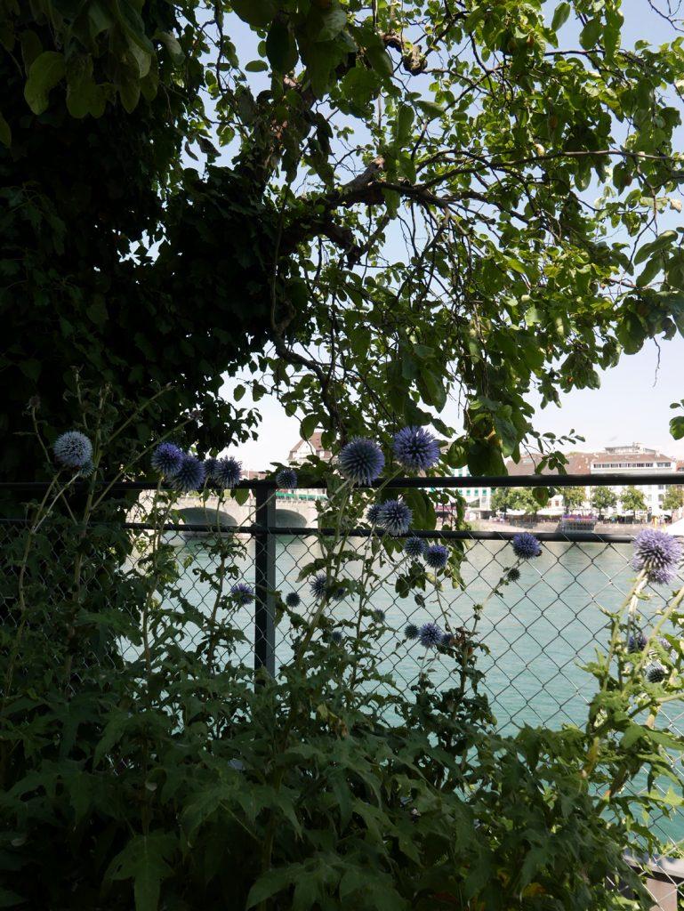 Katja Schmitt Basel Rhine Rhein Mittlere Bruecke Garden Garten