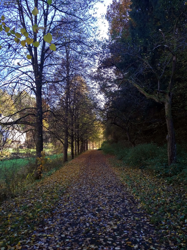 Katja Schmitt Malberg Wood Wald Kyll Eifel